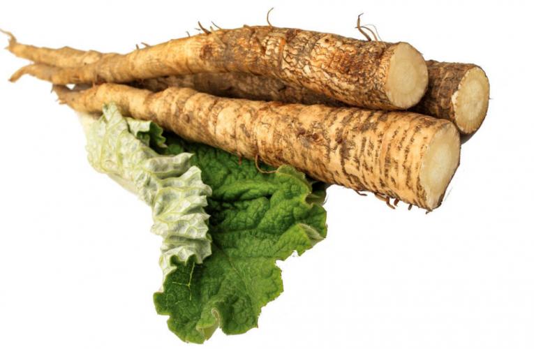 RĂDĂCINA DE BRUSTURE – Reduce glicemia, purifică sângele și inhibă cancerul