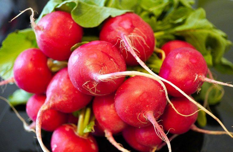 Ridichile roșii – Curăță rinichii și combat bolile respiratorii